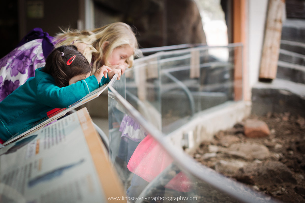 hogle zoo salt lake city friends everyday life photography-8.jpg