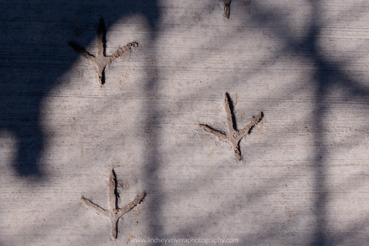 Tracy-Aviary-Salt-Lake-City00003.jpg