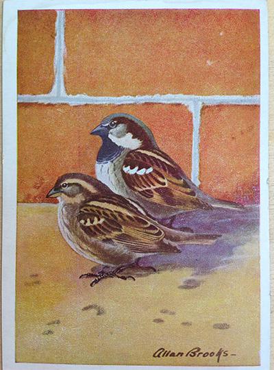 sparrow_before.jpg