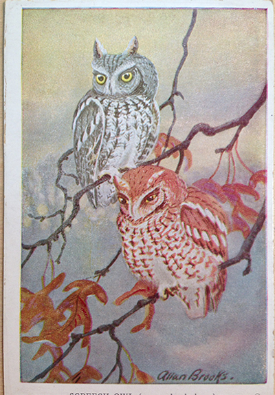 owl_card_before.jpg