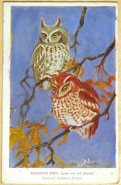 owl_card_after.jpg