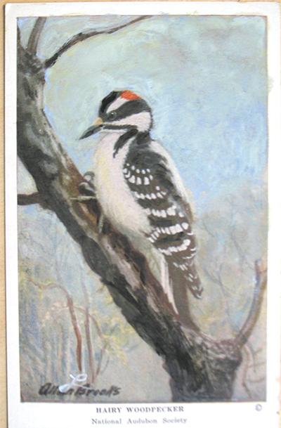 woodpecker_after.jpg