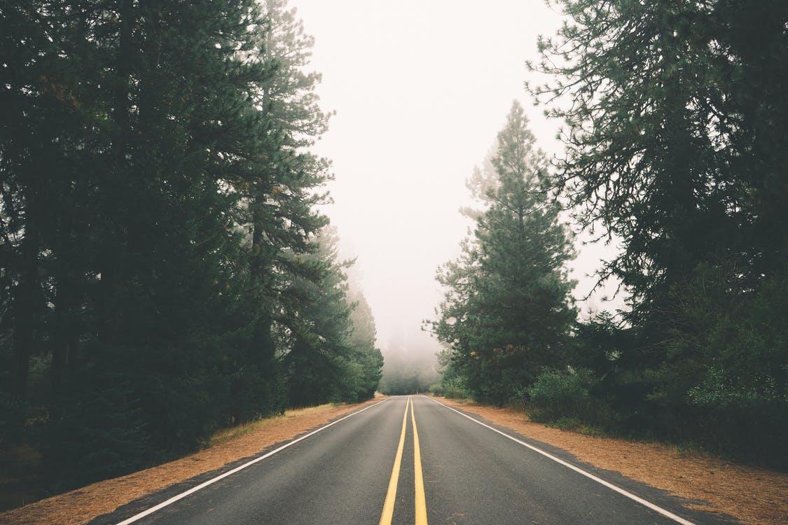 road-street-forest-fog.jpg