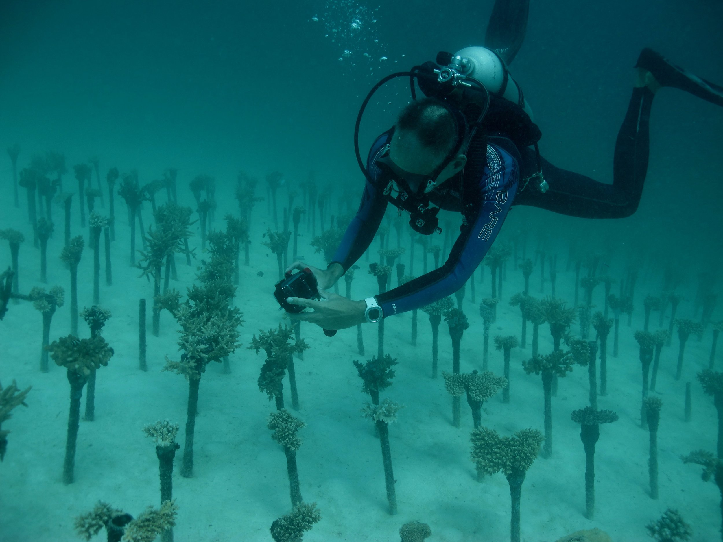 Above: Arjan from Diverland International with his coral nursery