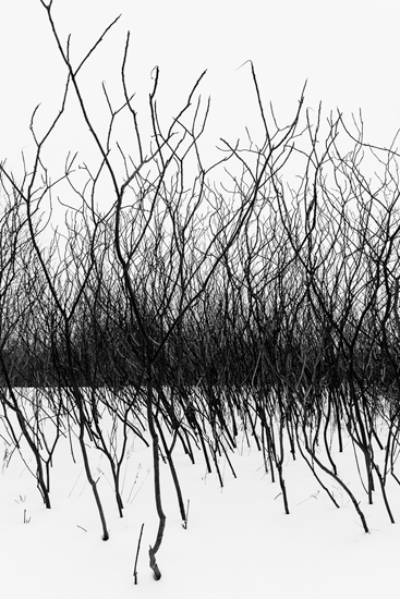 "Sarolta Gyoker  - "" Sumacs in the Snow"""