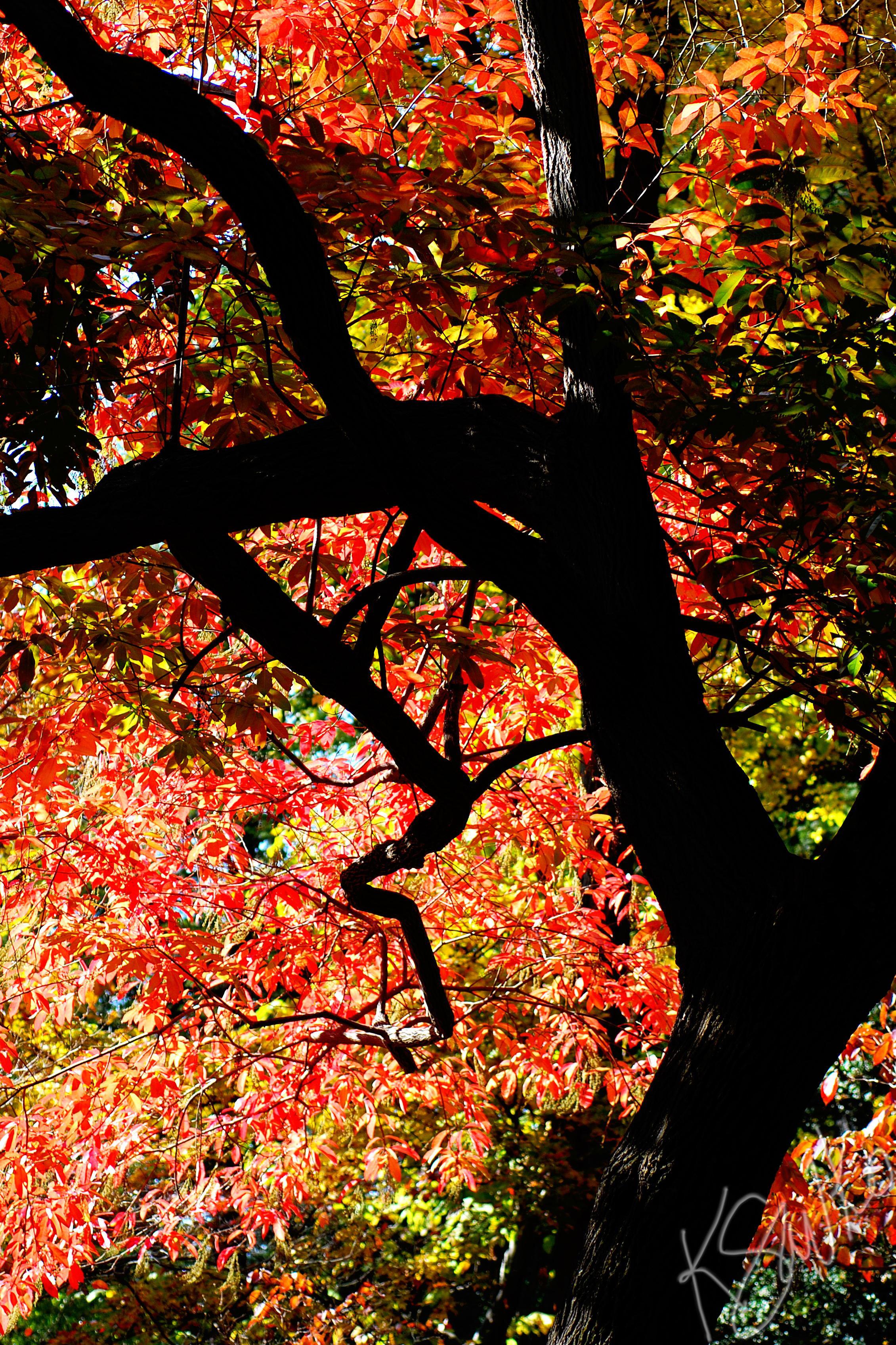 savko_fall-tree.jpg