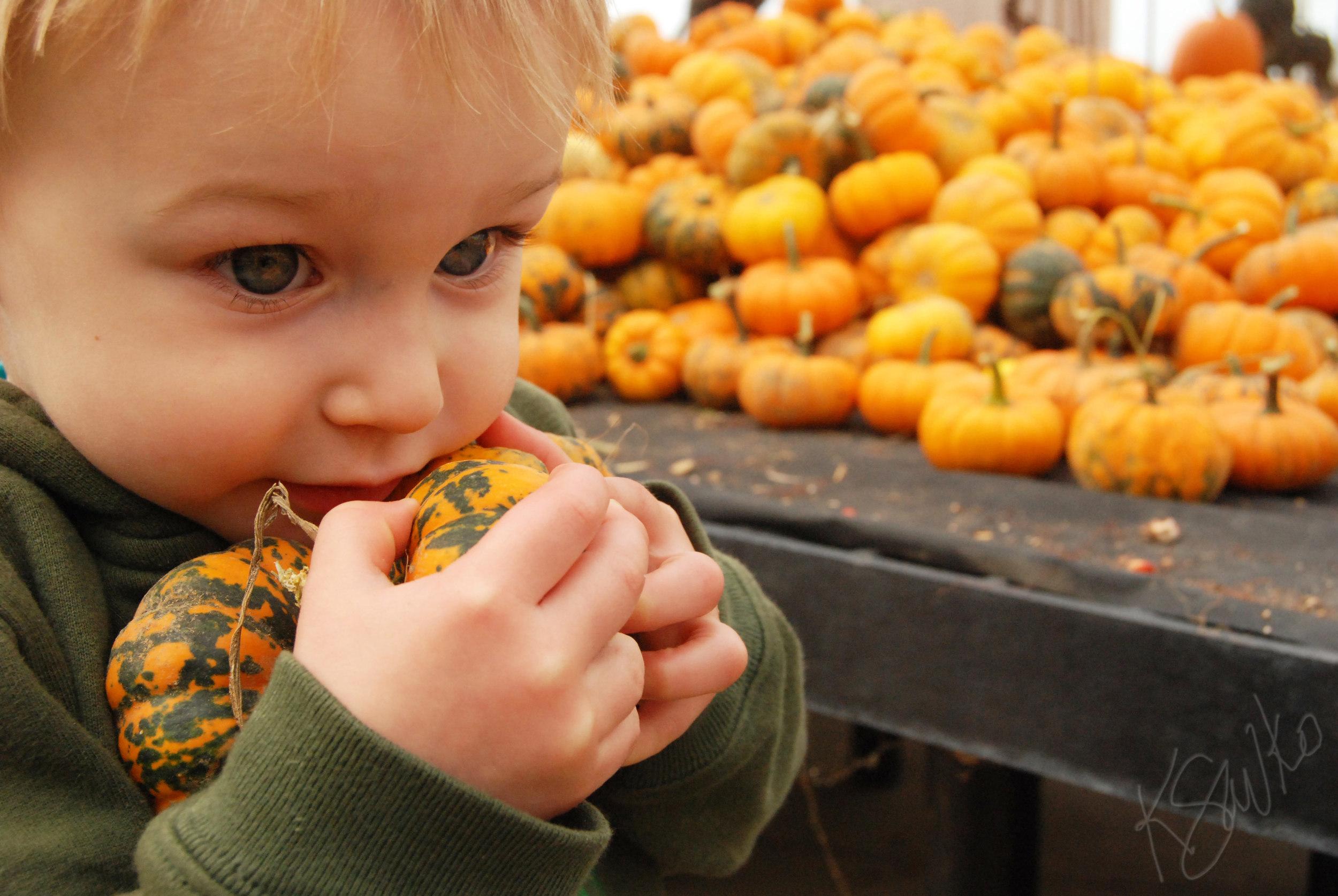 savko_pumpkin.jpg