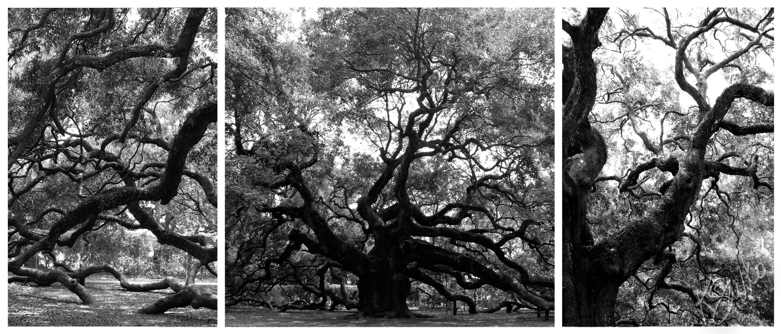 savko_trees.jpg