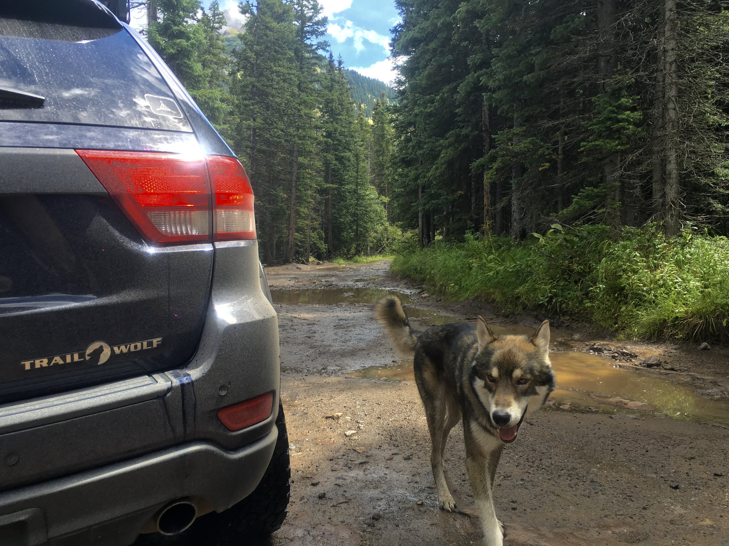 The custom Trail Wolf badge