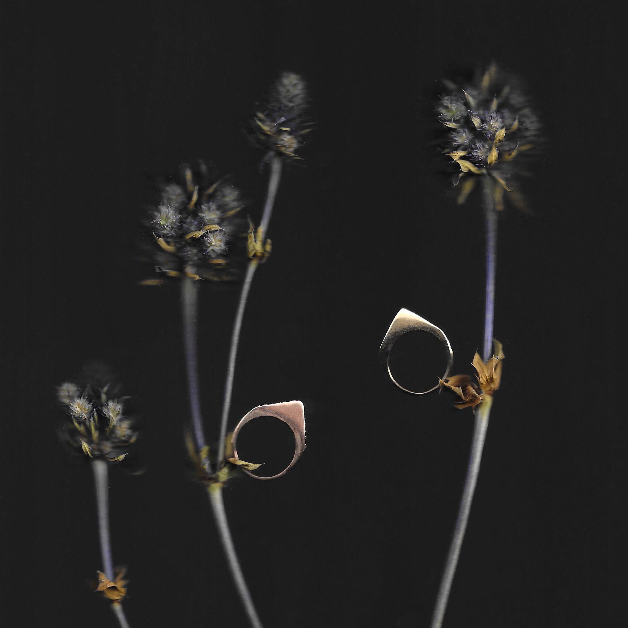 botanical stirrup.jpg