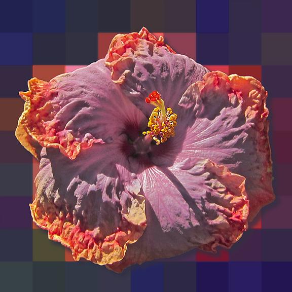 PurpleHibiscusMos4.jpg