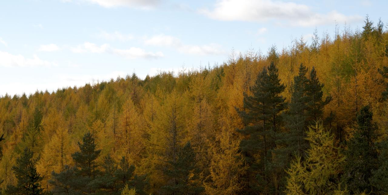 Bruar - Autumn Colours - DSC_0744.jpg