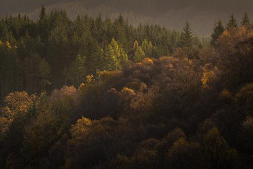 Autumn Light #1
