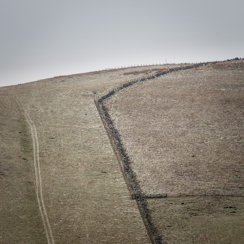 Field Lines #1