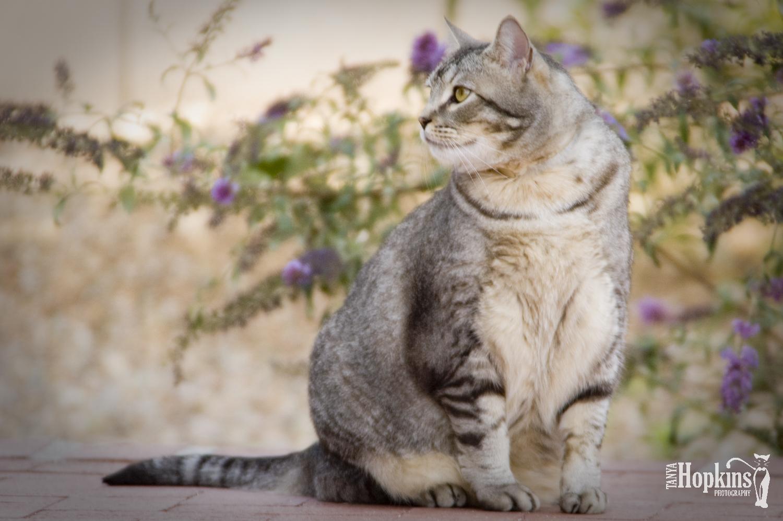 Tiger_Striped_Cat_In_Springtime.jpg