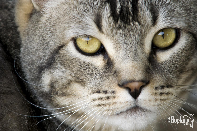 Green_Cat_Eyes.jpg