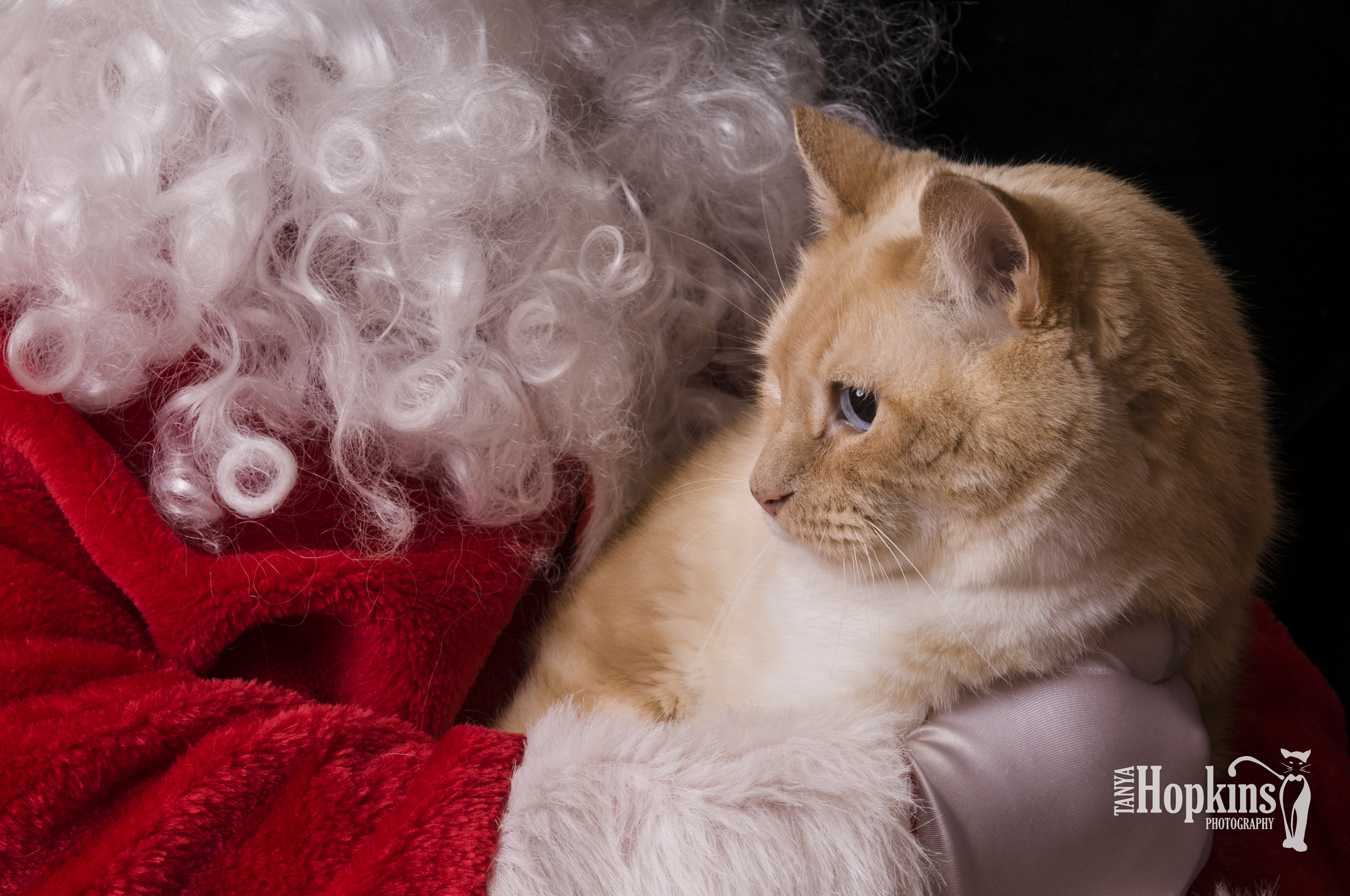 Orange_Cat_Holiday_Card-6744.jpg