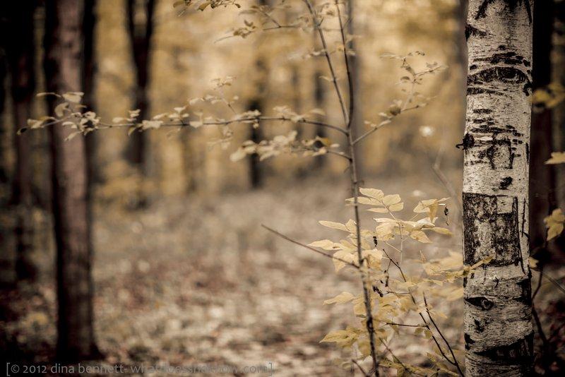 Beyond the birch
