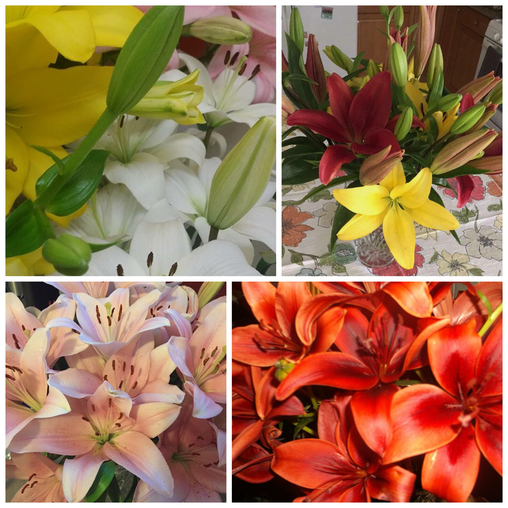 - We welcome your participation in the CRCD Desert Lily Campaign.