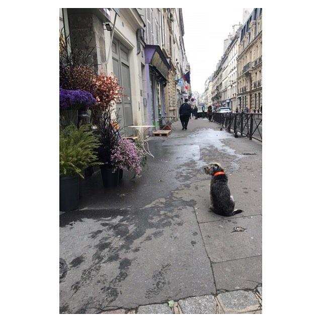 Dog of Paris flower shop