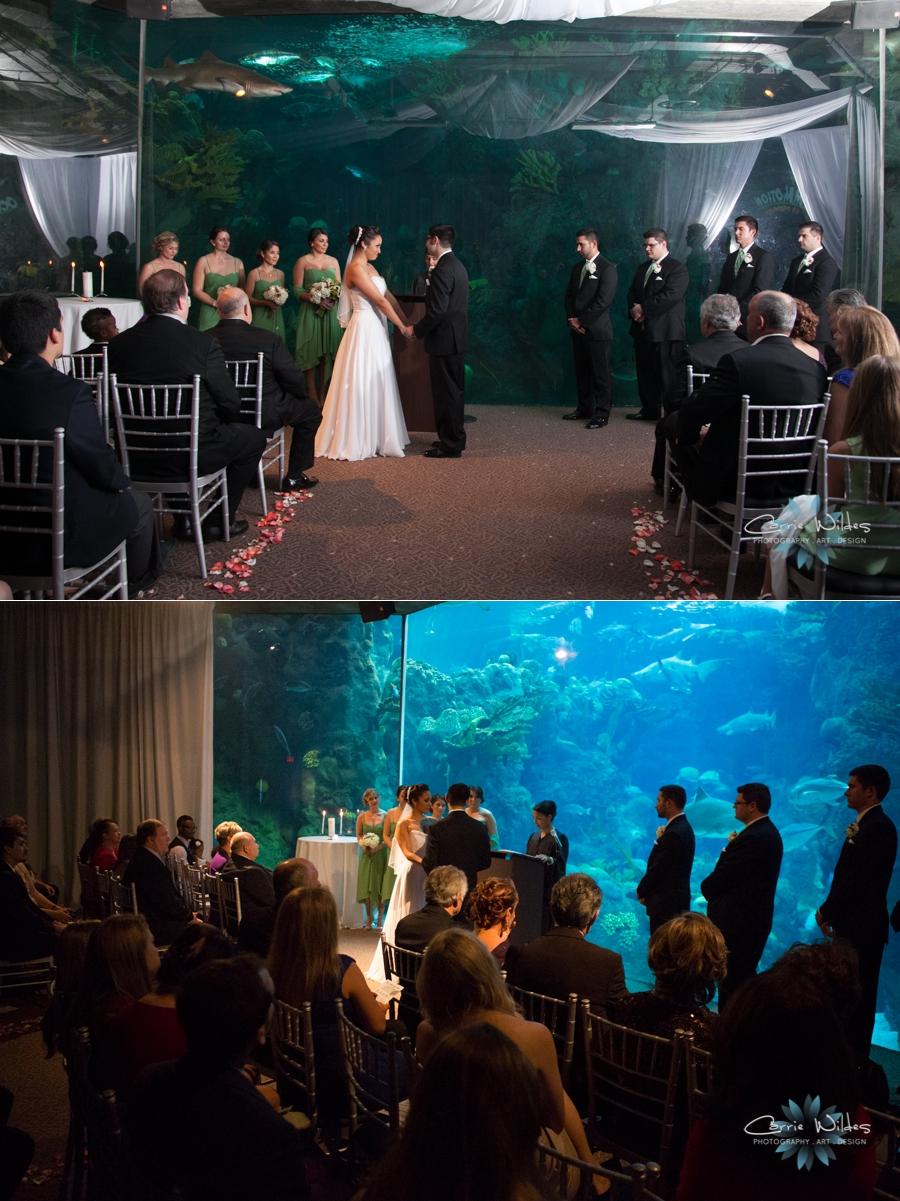 3_23_13 Florida Aquarium Wedding_0004.jpg