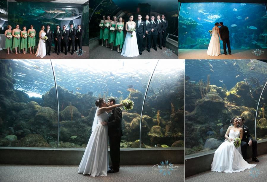 3_23_13 Florida Aquarium Wedding_0005.jpg