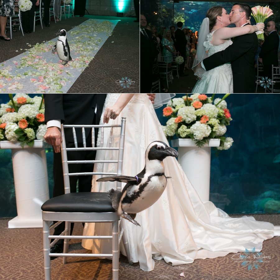 10_12_13 Florida Aquarium Wedding_0007.jpg