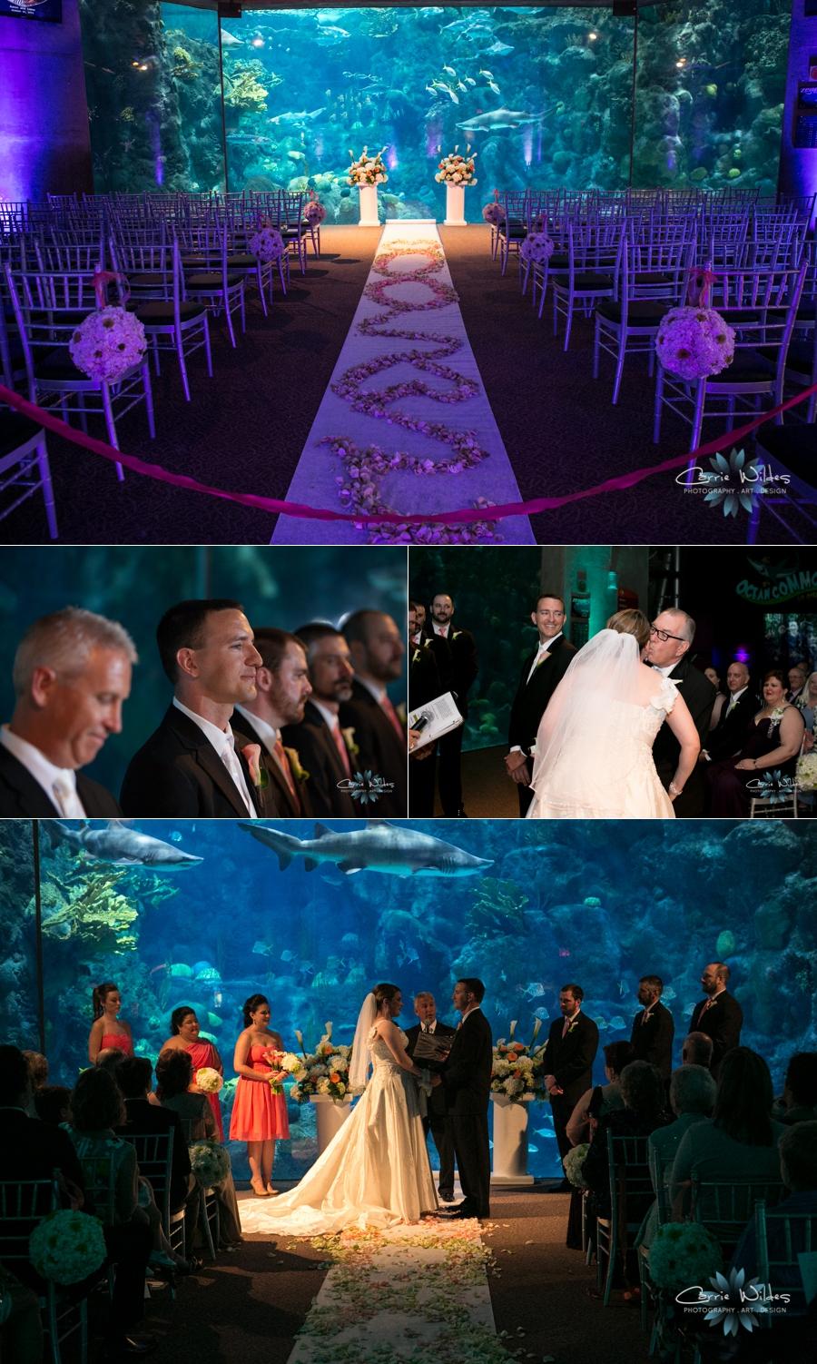 10_12_13 Florida Aquarium Wedding_0006.jpg