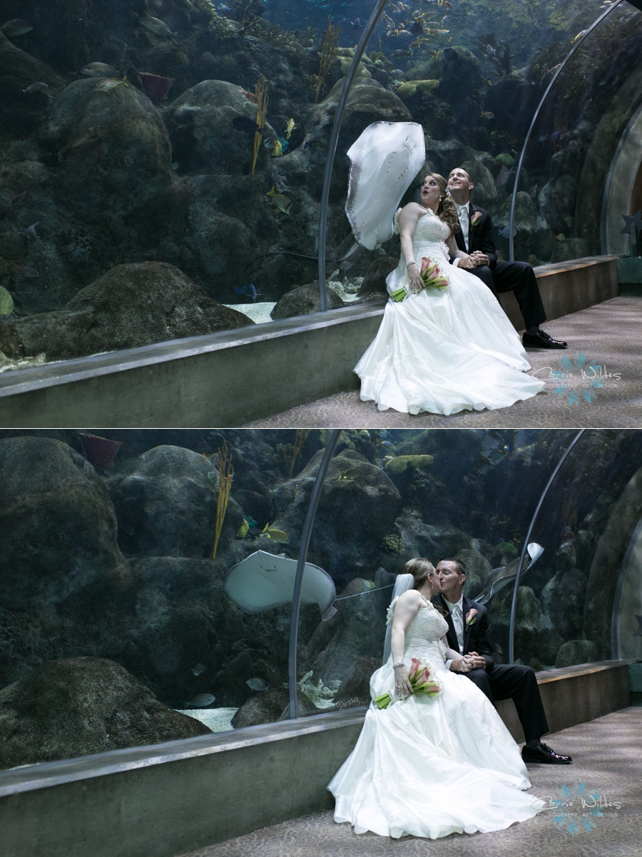 10_12_13 Florida Aquarium Wedding_0009.jpg