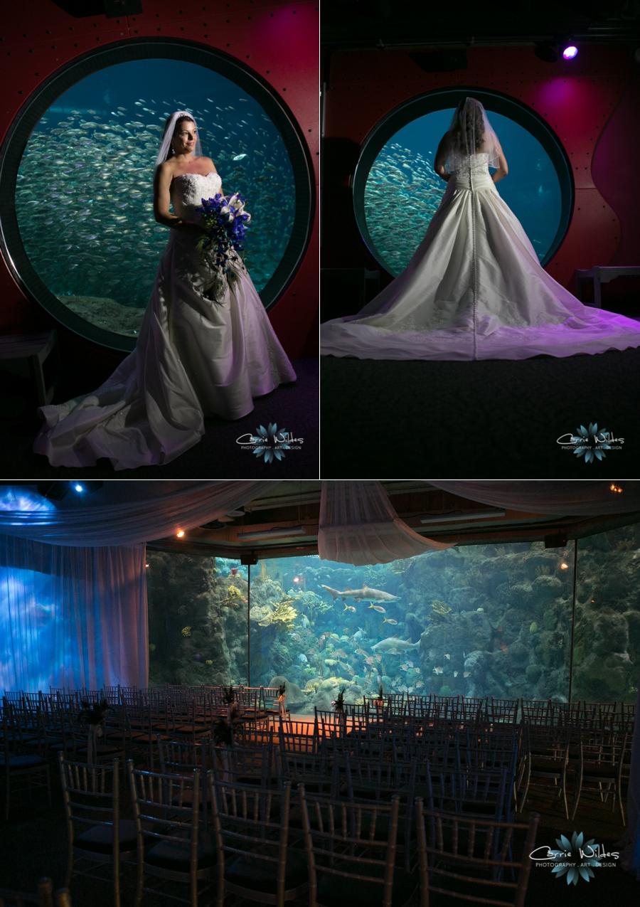 10_19_13 Florida Aquarium Wedding_0004.jpg