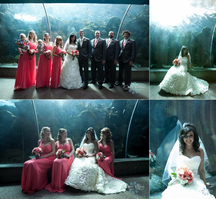 11_2_13 Florida Aquarium Wedding_0002.jpg