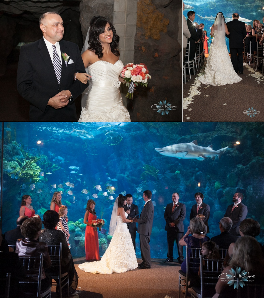 11_2_13 Florida Aquarium Wedding_0005.jpg
