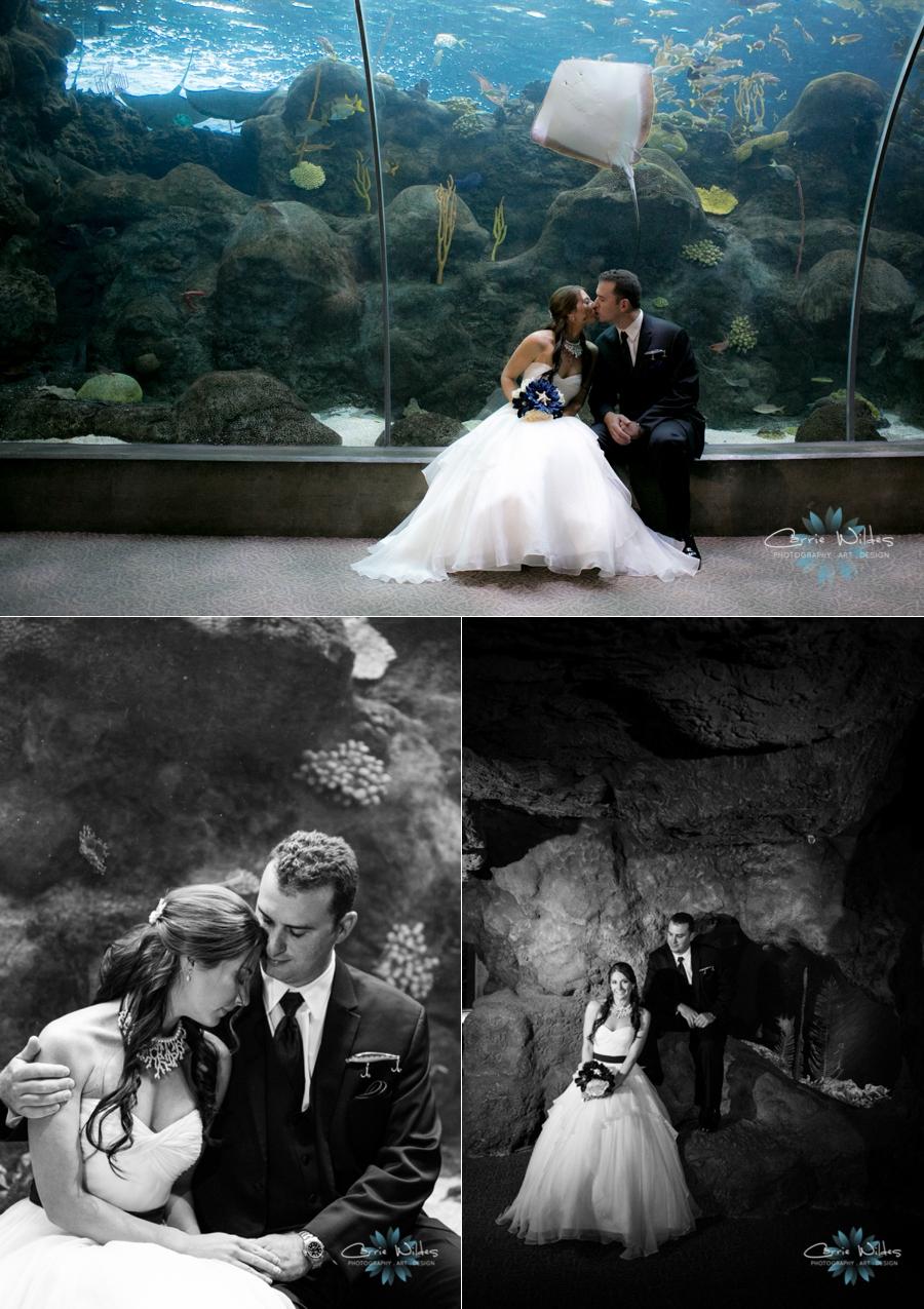 1_18_14Florida_Aquarium_Wedding_0005.jpg