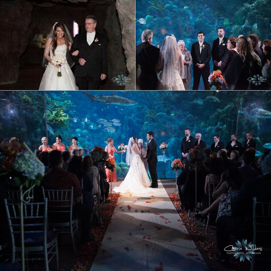 2_14_15 Florida Aquarium Wedding_0014.jpg