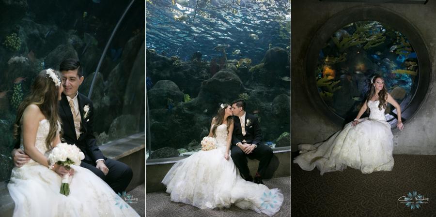 2_14_15 Florida Aquarium Wedding_0016.jpg