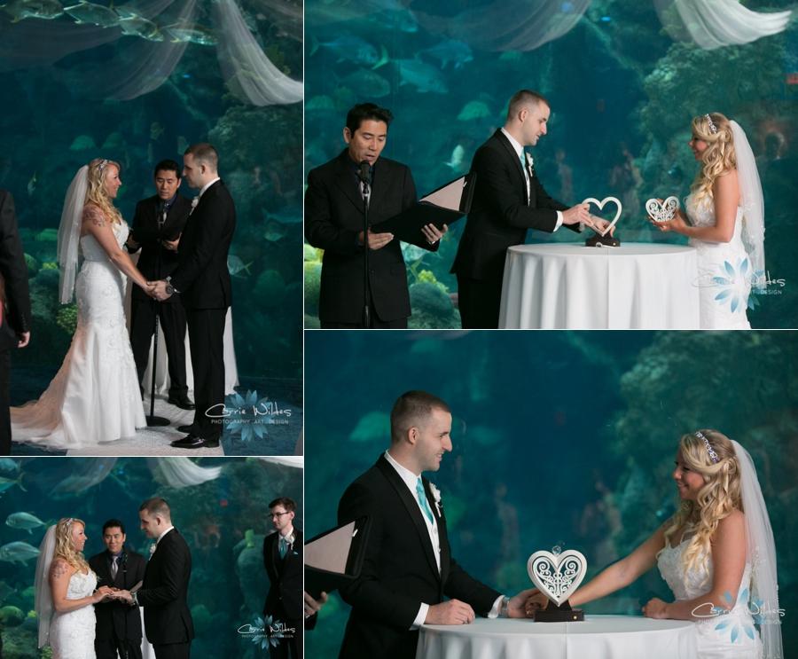 1_15_16 Florida Aquarium Wedding_0002.jpg