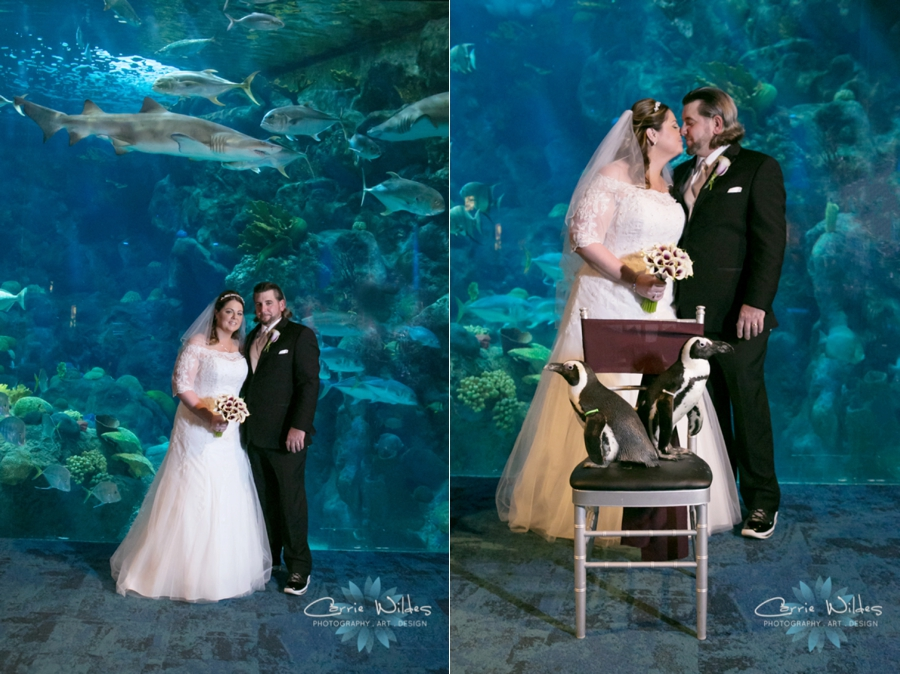 1_31_16 Florida Aquarium Wedding_0010.jpg
