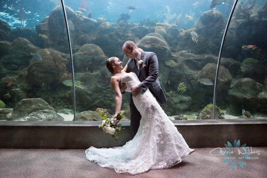 7_15_16 Florida Aquarium Wedding_0018.jpg