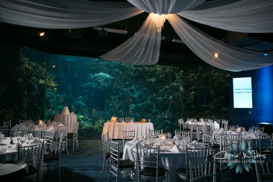 8_19_16 Florida Aquarium Wedding_0031.jpg