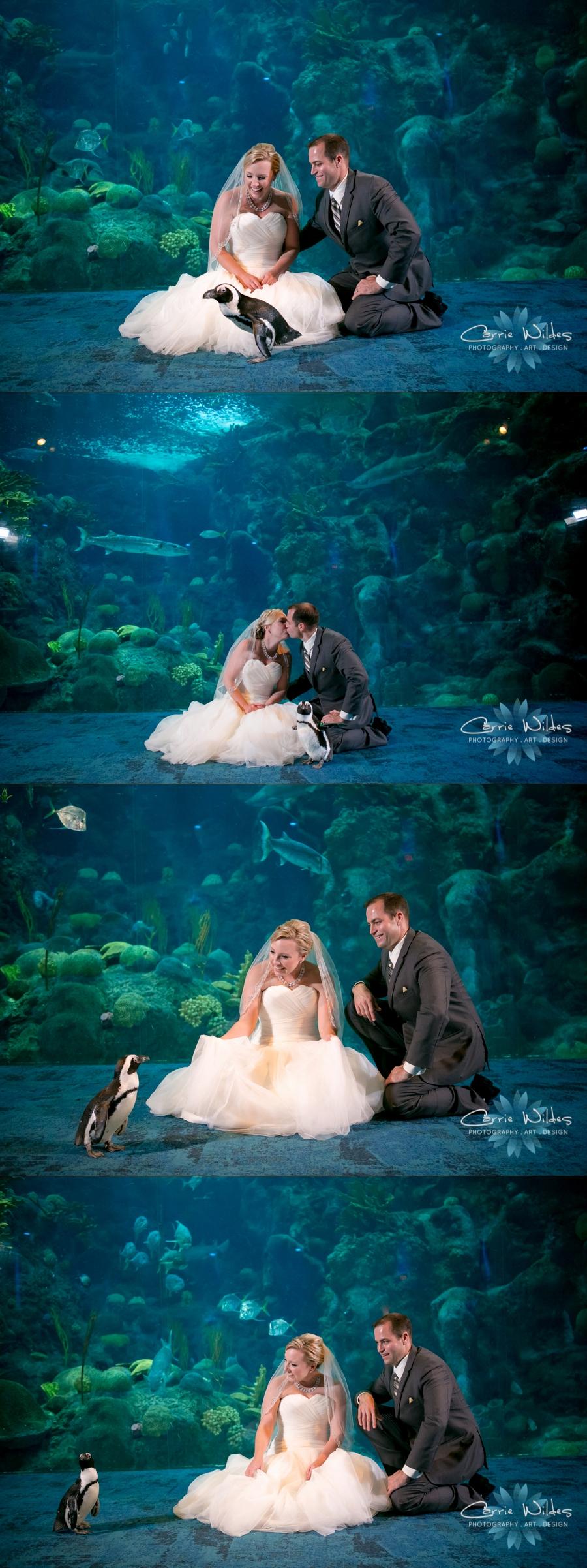 8_19_16 Florida Aquarium Wedding_0030.jpg