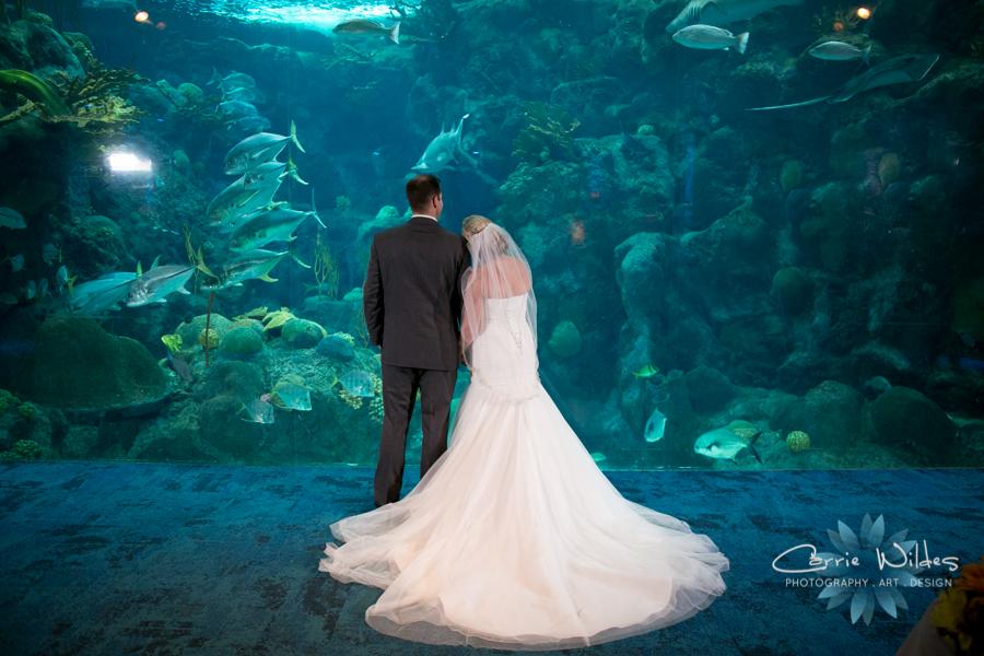 8_19_16 Florida Aquarium Wedding 62.jpg