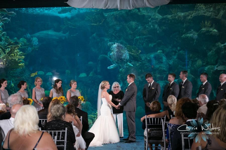 8_19_16 Florida Aquarium Wedding_0027.jpg