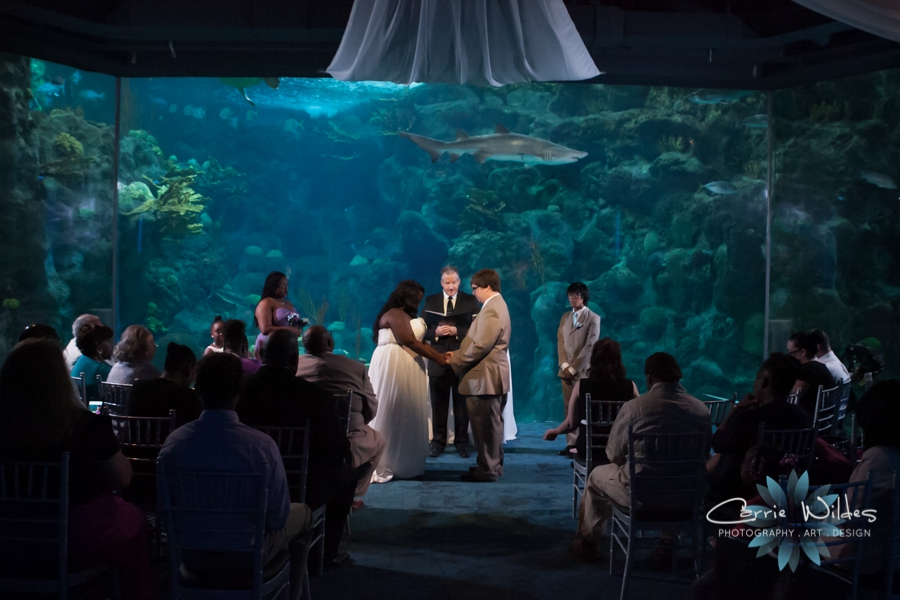10_22_16 Florida Aquarium Wedding_0004.jpg