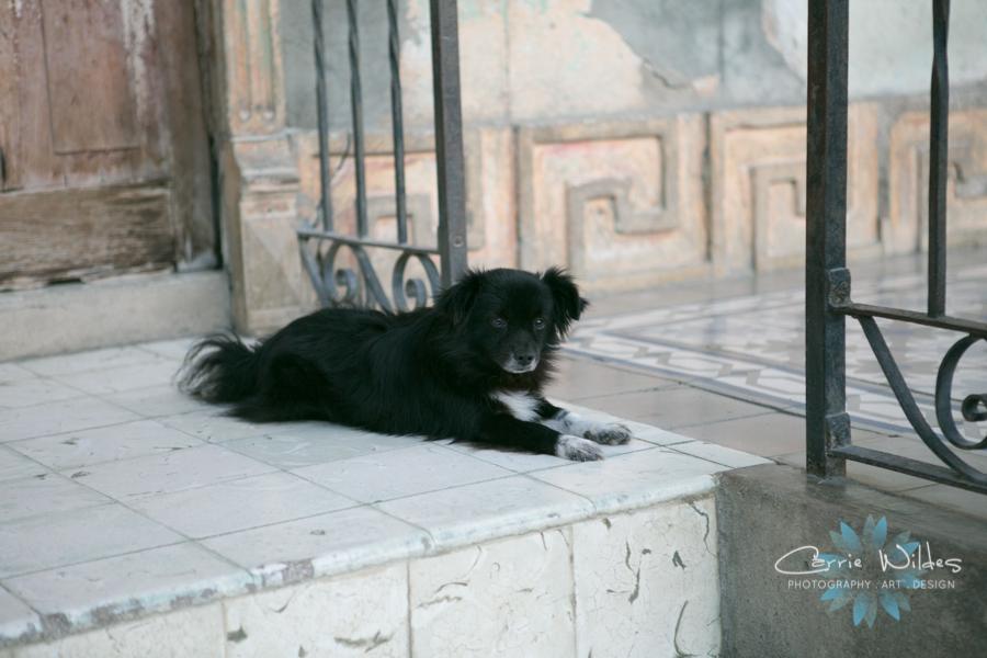 2_15_17 Guantanamo Cuba 08.jpg