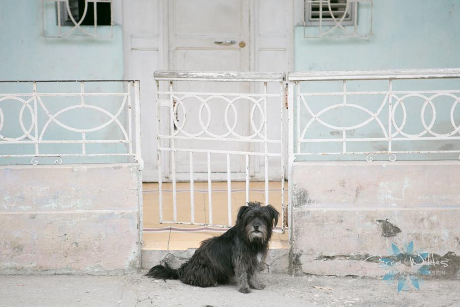 2_15_17 Guantanamo Cuba 28.jpg
