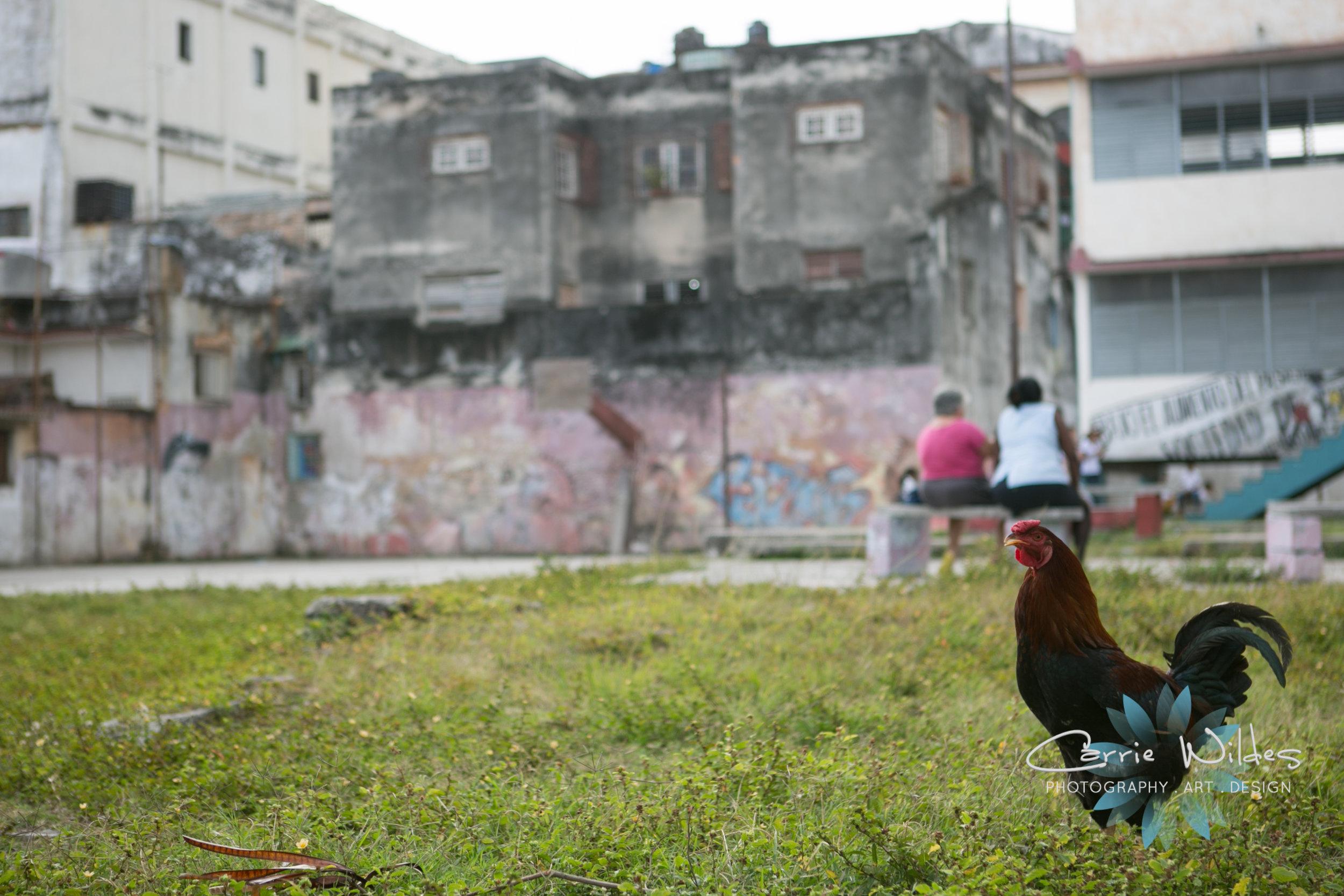 Havana Cuba 020.jpg