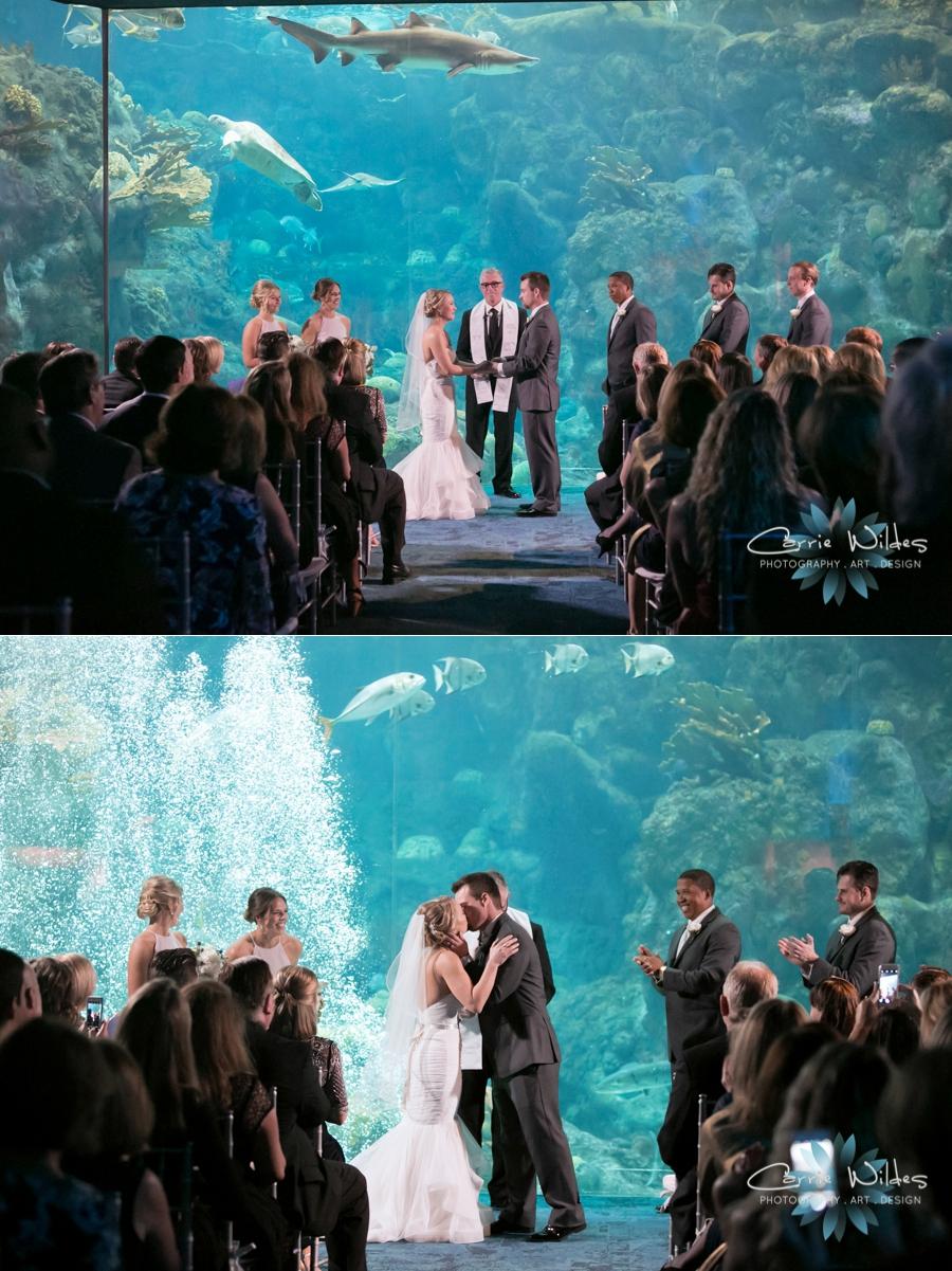2_17_18 Kristin and Curtis Florida Aquarium Wedding_0038.jpg