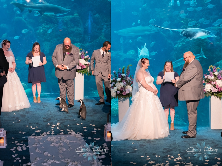 10_21_18 Emily and Bryan Florida Aquarium Wedding_0005.jpg
