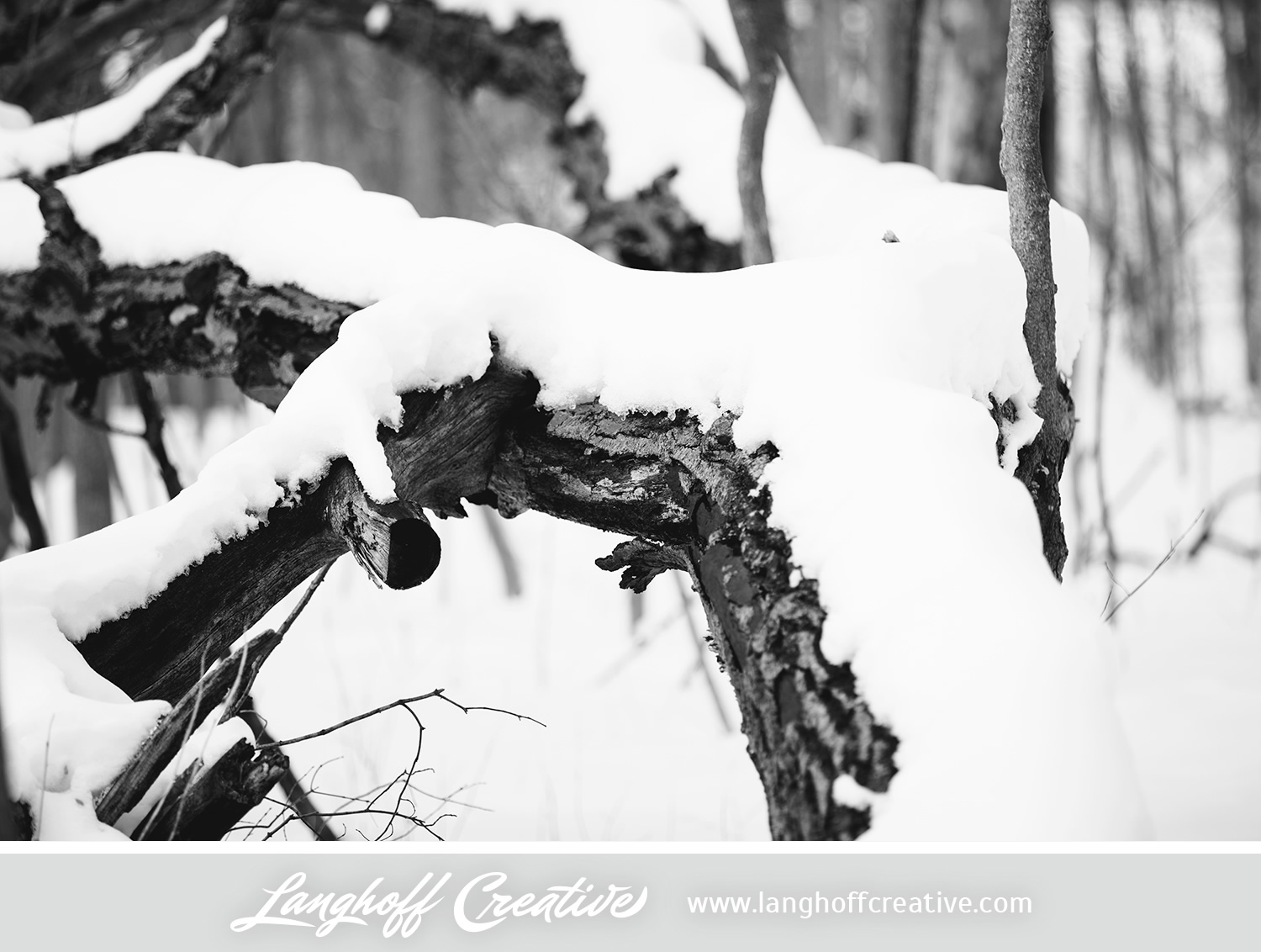 LanghoffCreative-20130308-winter12-image.jpg