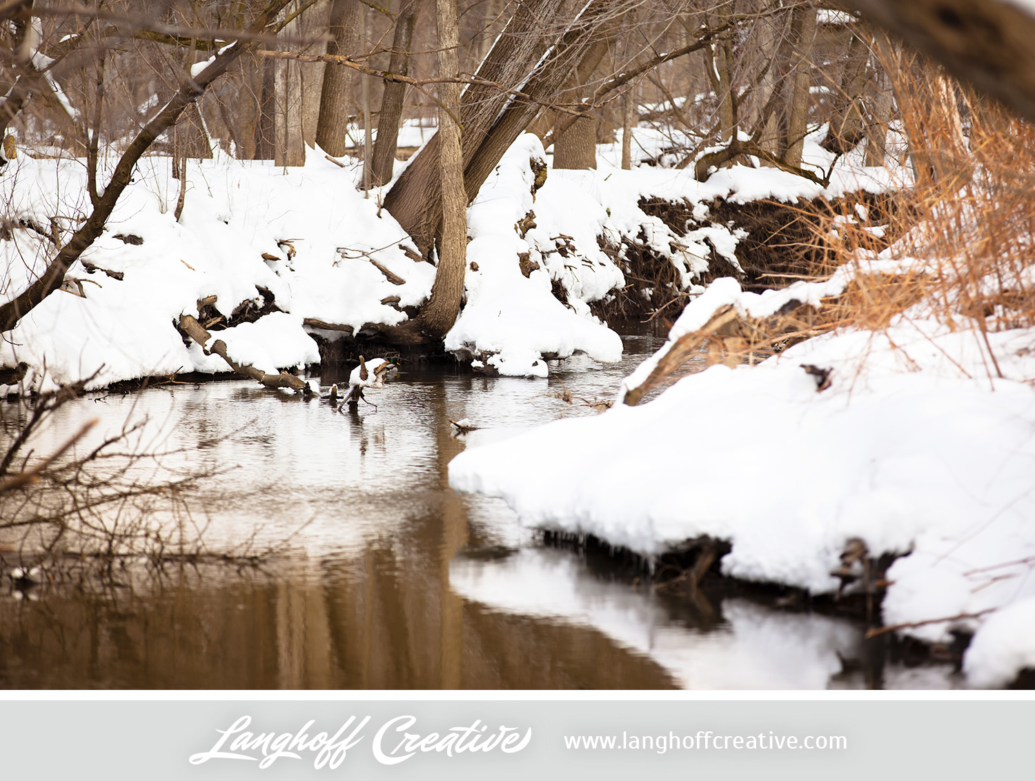 LanghoffCreative-20130308-winter14-image.jpg